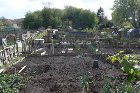 Stutton Road allotment