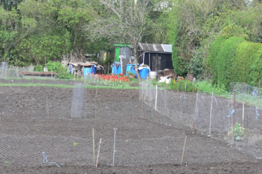 Westfield allotments