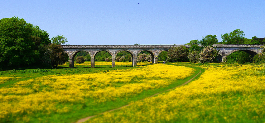 viaduct with bright yellow flowers in the foreground